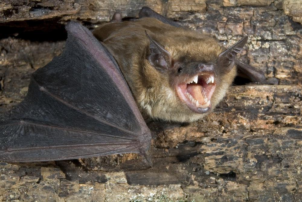 Bat Hibernaculum