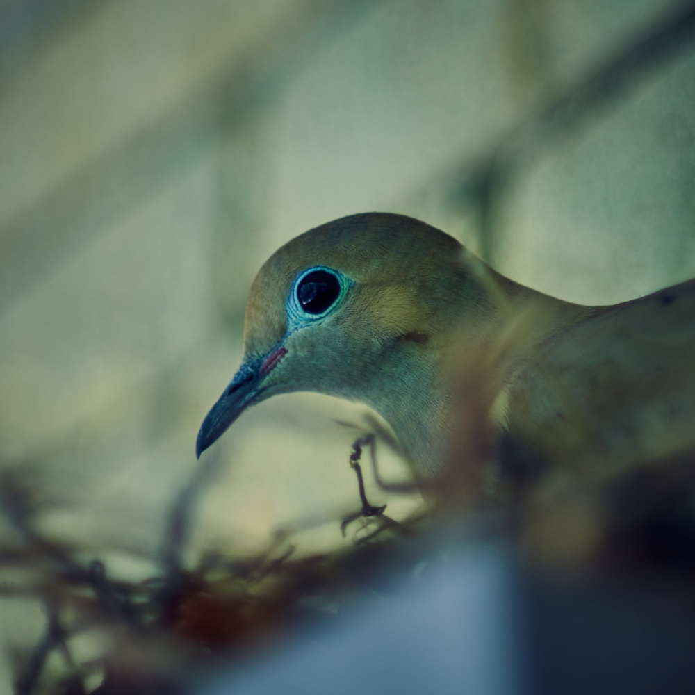 The Peaceful Dove - ISO 200 1/100 Pentax 50mm (f2.8 I believe)