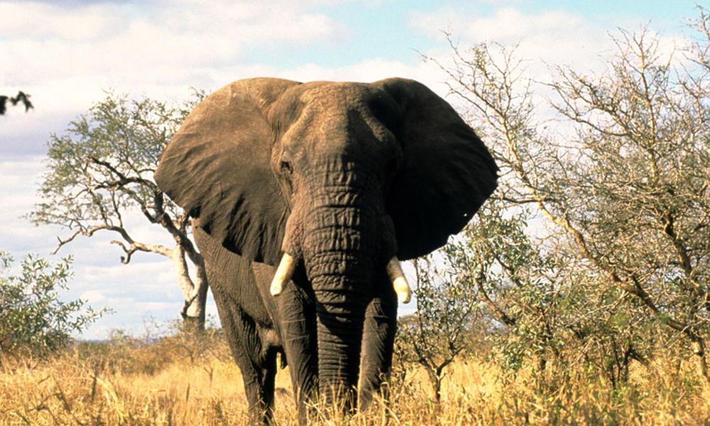 African-Elephant_08.23.2012_Help.jpg