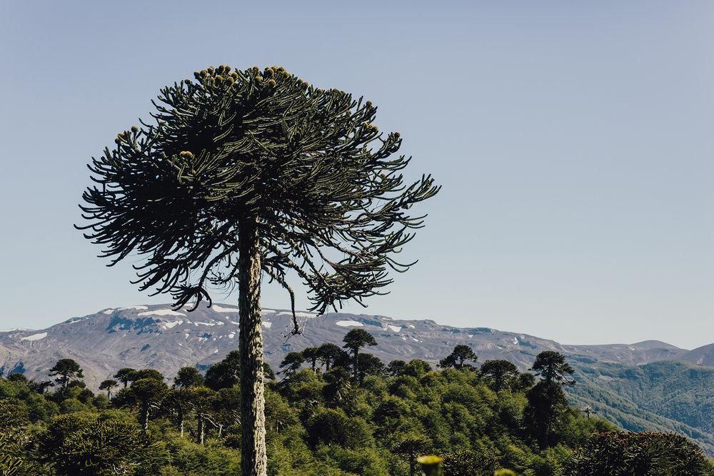 Villarrica-Traverse-Day-1-1075.jpg