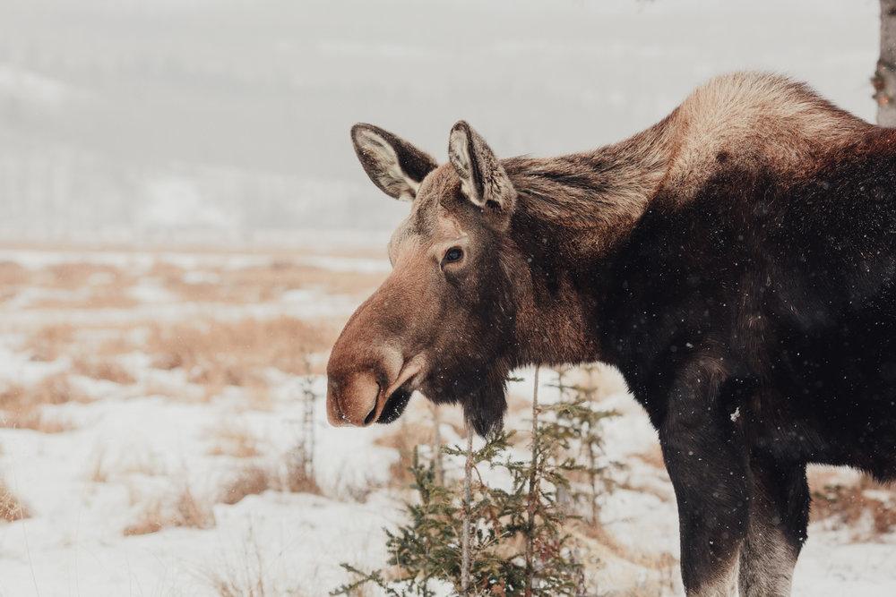 Yukon-2-3.jpg
