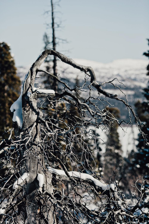 Yukon-Nugget-0166.JPG
