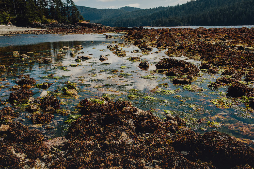 Intertidal shoreline in Gwaii Haanas
