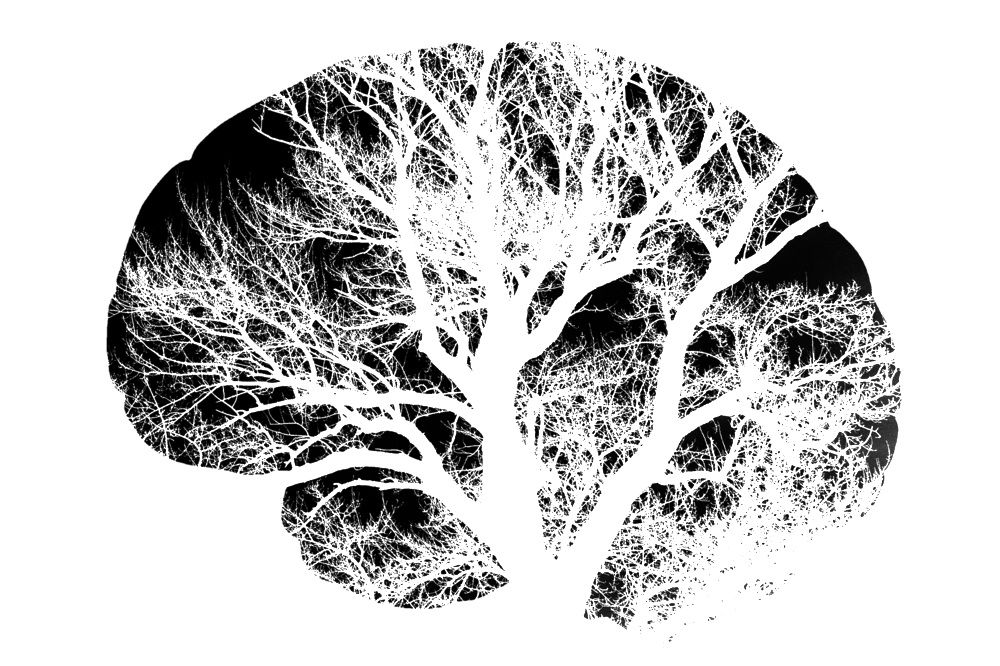 Growing Mind | Photo by Pixabay