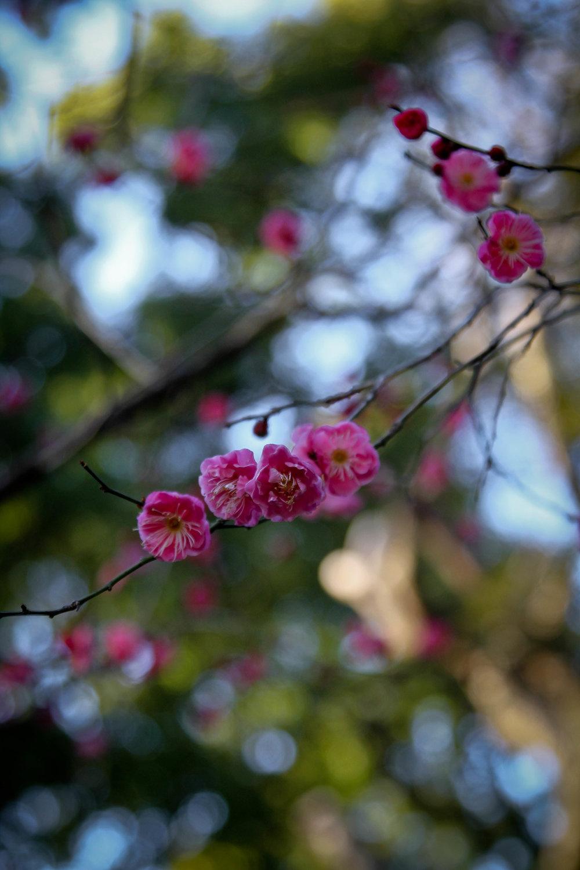 DOJ_8715.jpg