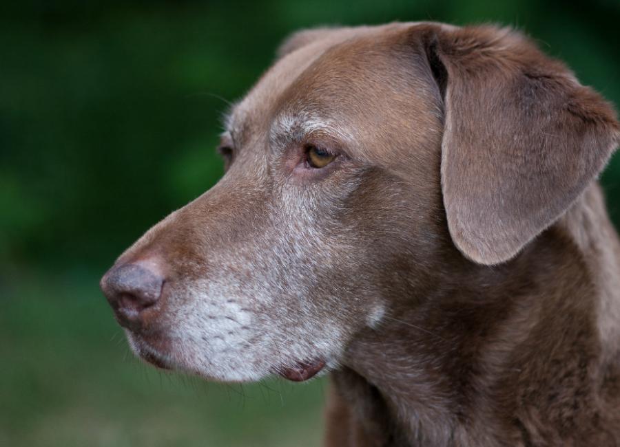 Training Puppies To Seniors