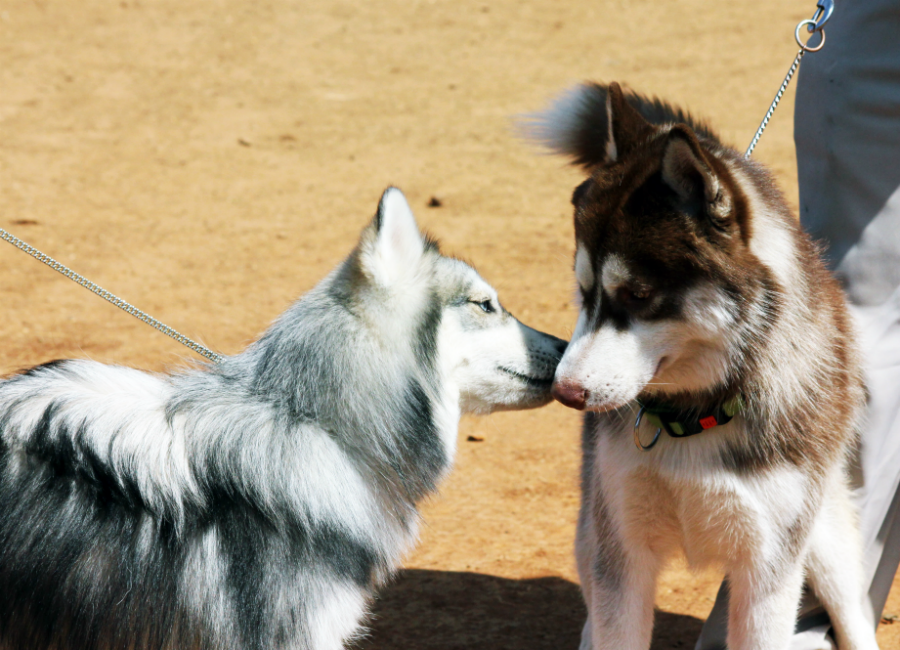 How To Get Along With Other Dogs