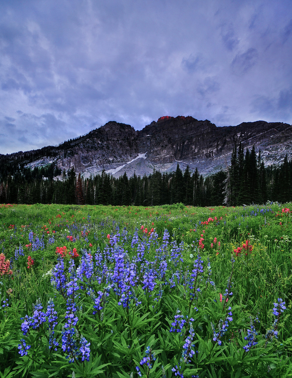 Wildflowers and Showers