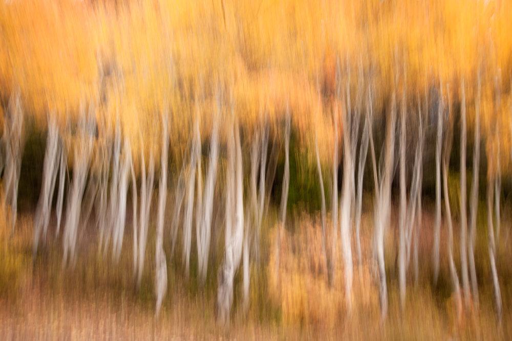 An Autumn Impression