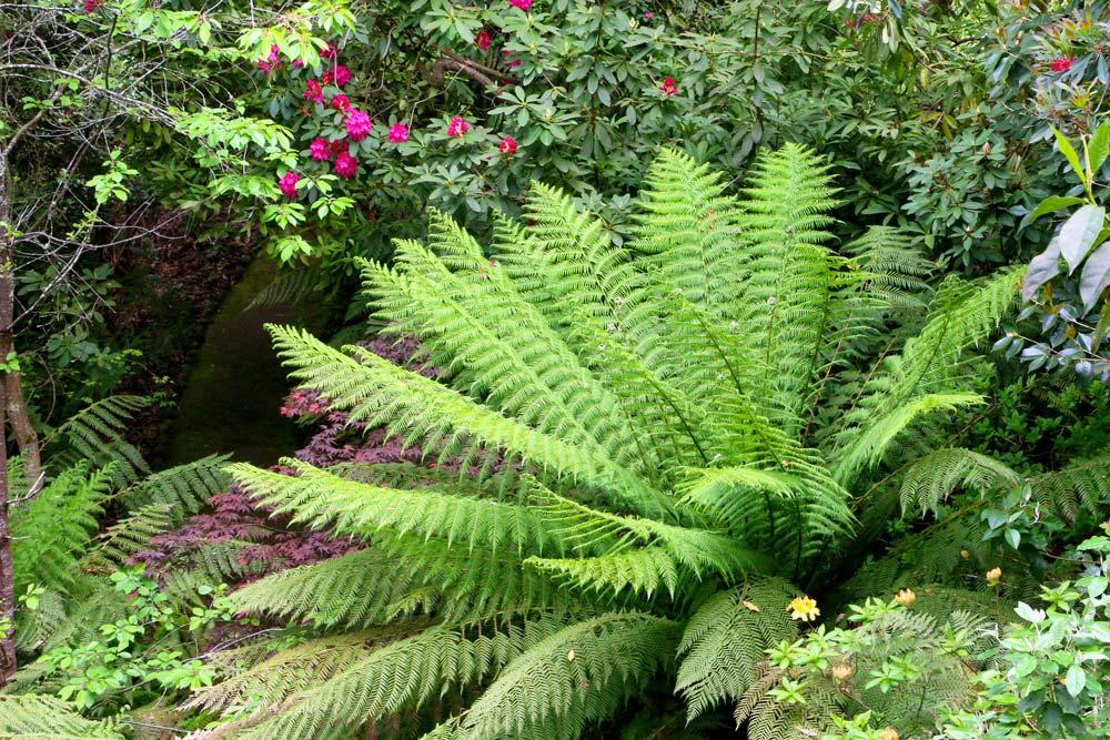 3170-tree-fern-nice-1000-40.jpg