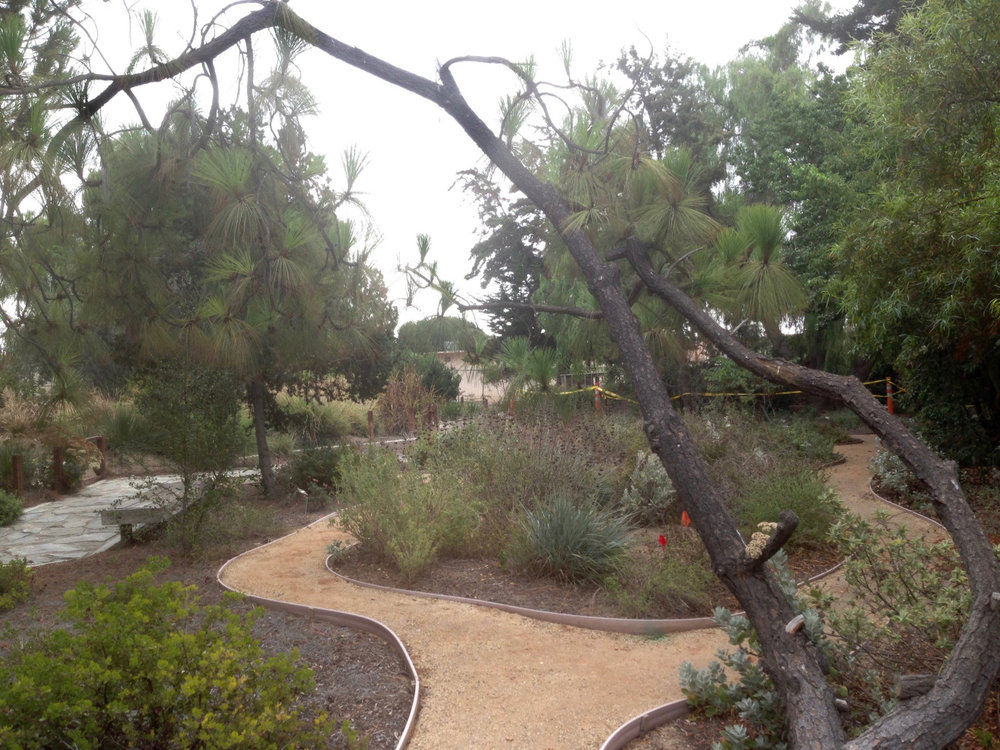 A view of South Bay Botanic Garden – Photo by Susan Krzywicki