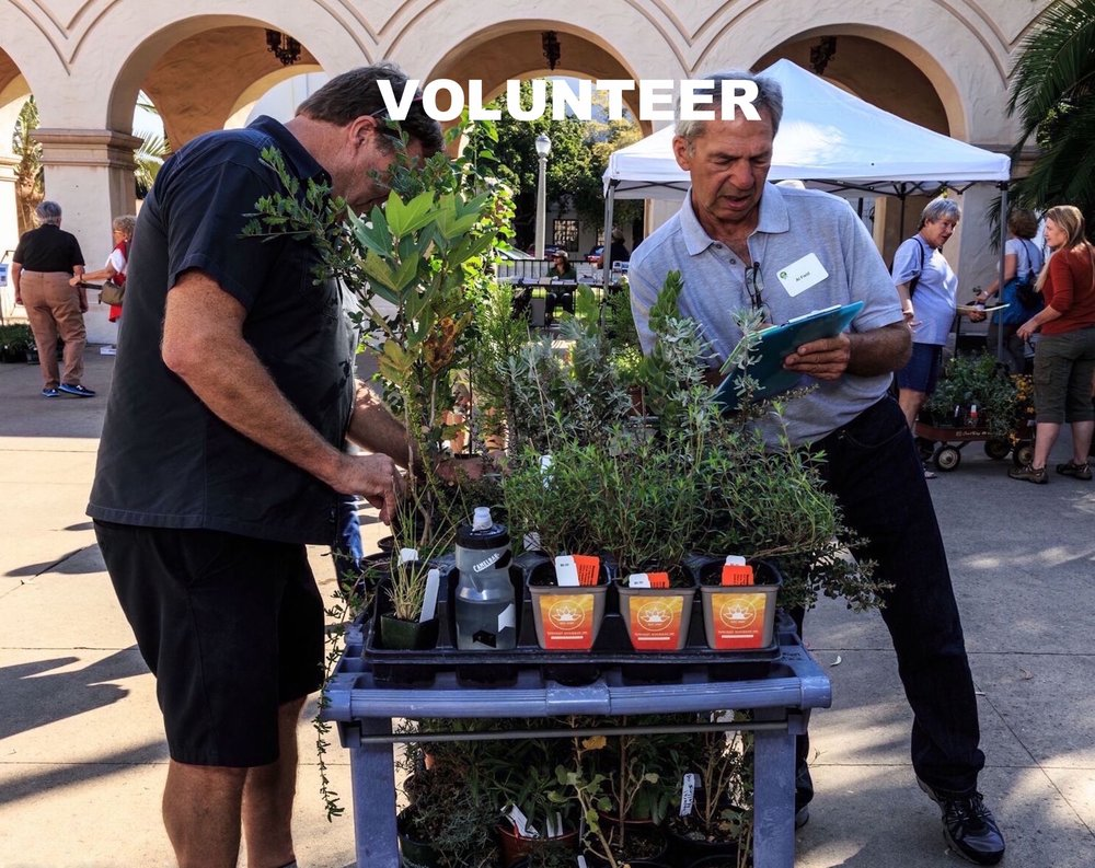 Volunteer Homepage checking plants copy.jpeg