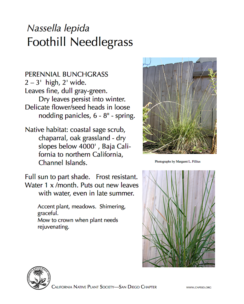 Foothill Needlegrass.jpg.png