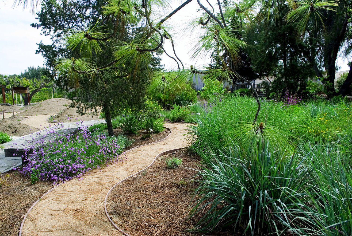 Gardeners and Landscape Contractors. California's Own Native ... - Landscape Professionals — California Native Plant Society-San Diego