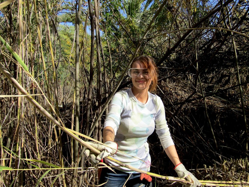 Habitat Restoration NEW 2.jpg