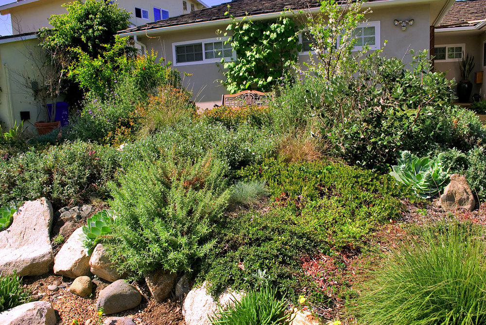 Upcoming Events California Native Plant Society San Diego Chapter