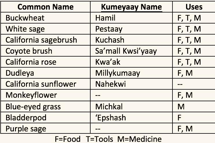 Kumeyaay Plant Names.png