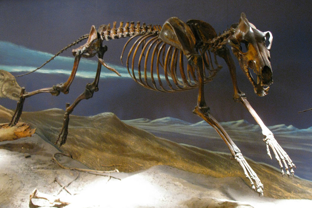 Eden, Janine and Jim ,  Dire Wolf Skeleton ,  CC BY 2.0