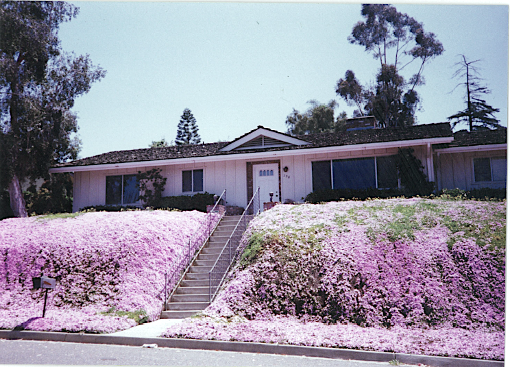House covered in ice plant in 1992