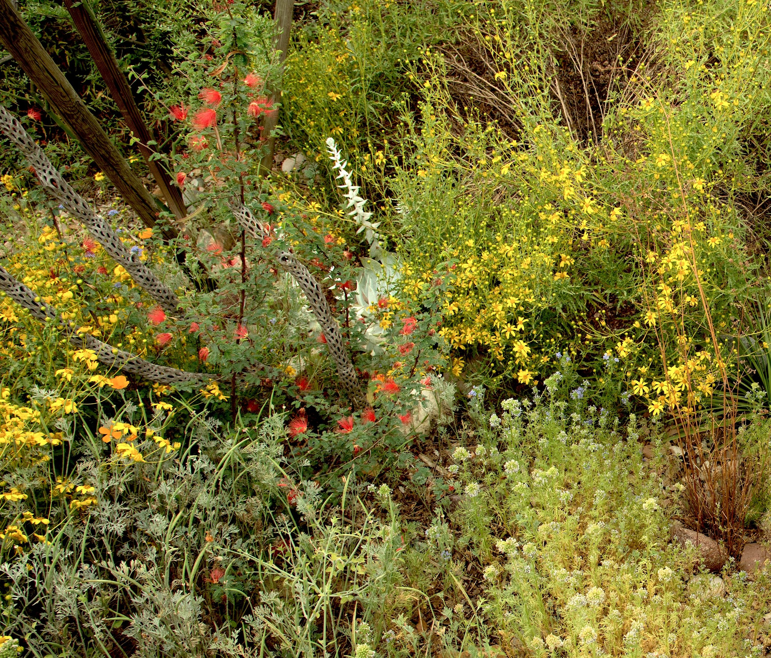 Chapter Blog California Native Plant Society San Diego Chapter