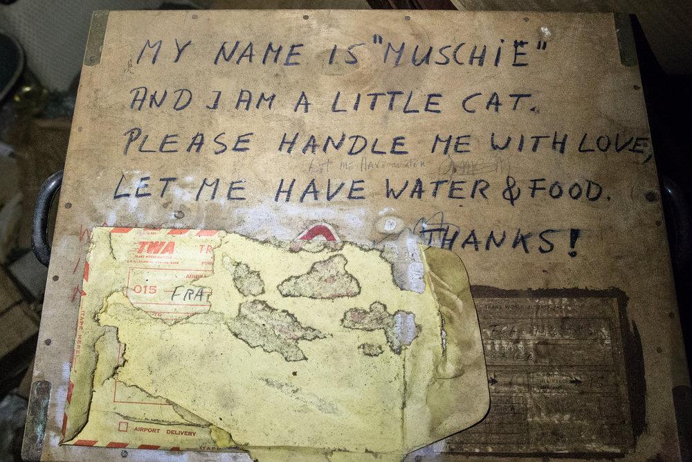 mushie cat.jpg