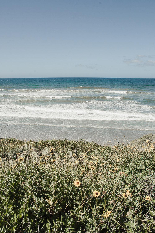 SeasideSpringBlooms5384.jpg