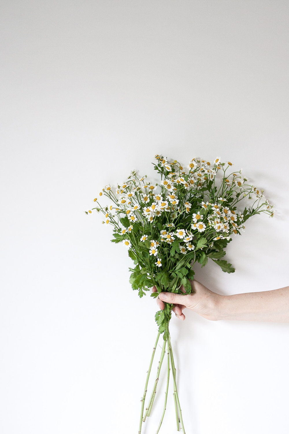 "Chamomile Ode to Lifestyle Change: Busy perfectionist ""woman bosses"" may need to slow down, self-care, self-work, and journal to find true acceptance, contentment and peace."