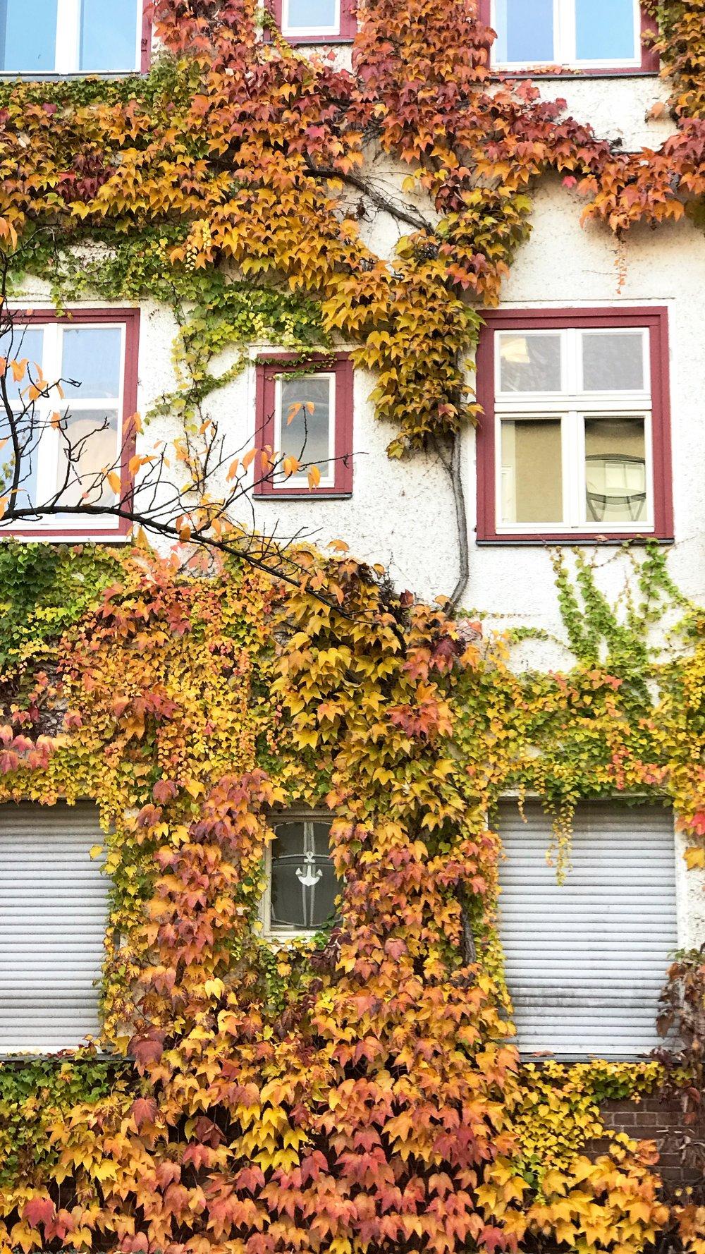 Fall in Berlin. So much change.
