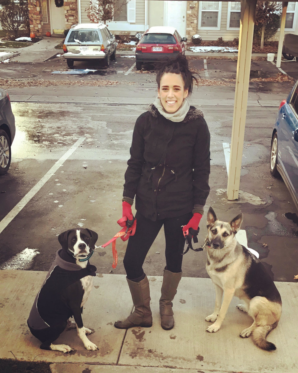 dogs obedience training trainer  orem utah county