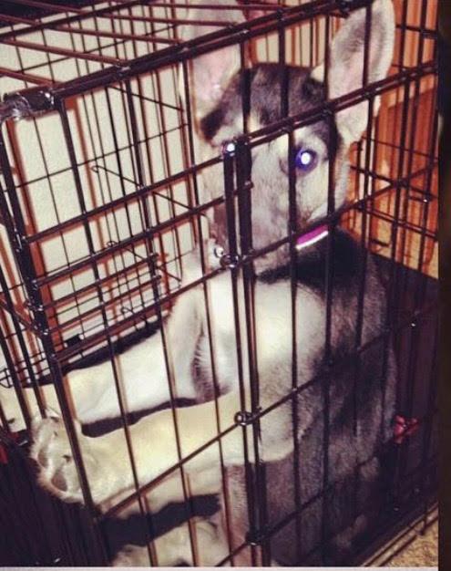 dog training utah salt lake city