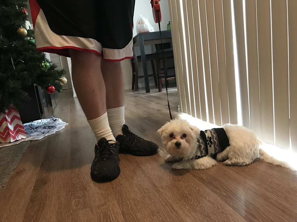 puppy training leash no pull