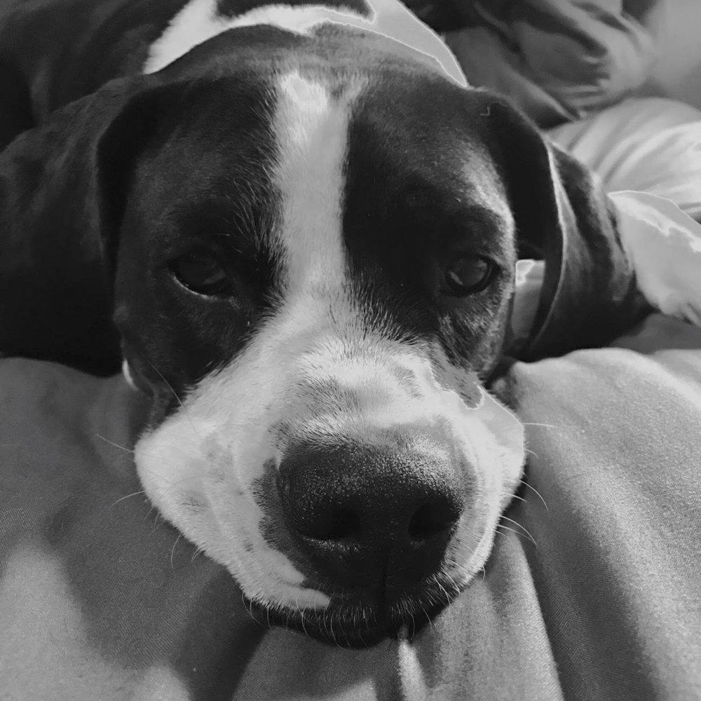 relationship sleep dog obedience utah