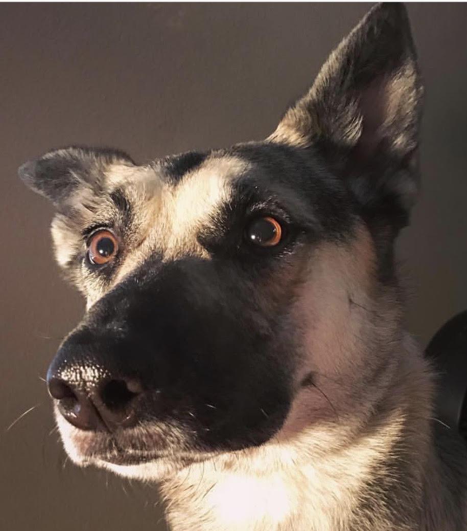 trump safe dog obedience orem
