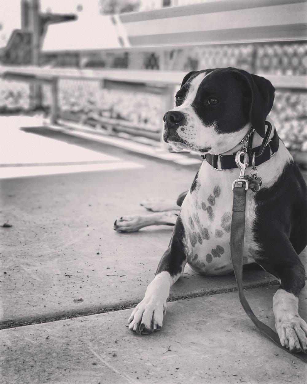 relax dog park good boy orem utah county