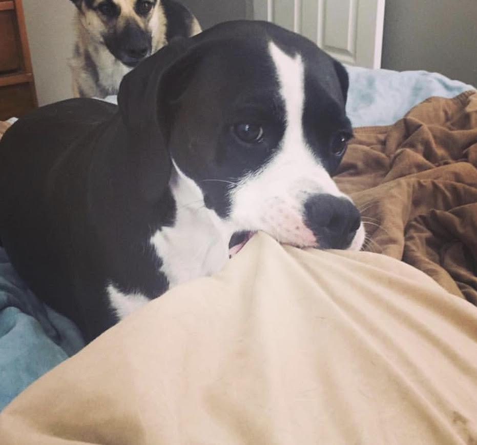 dog training biting utah salt lake city obedience