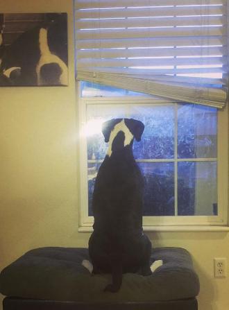 dog training utah obedience