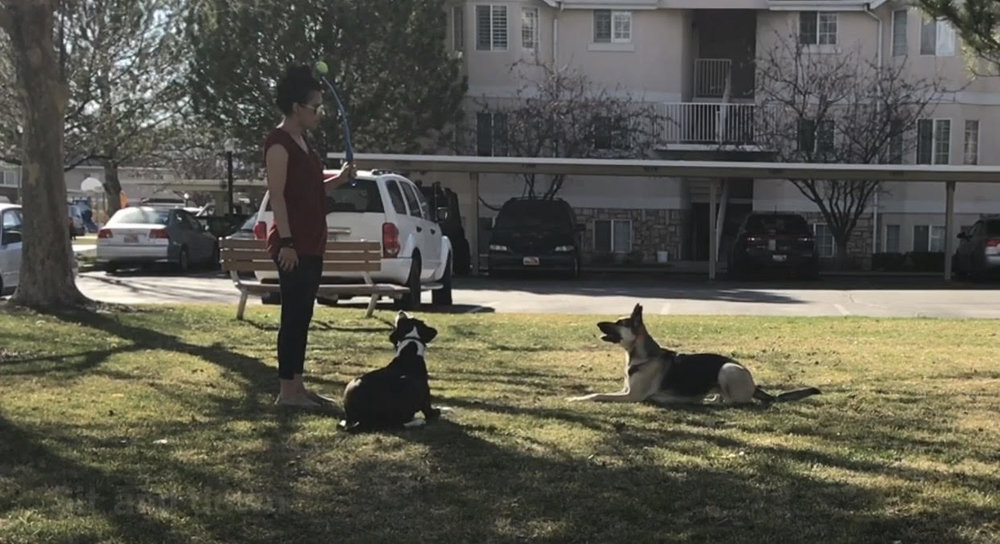 good dogs trainer park orem