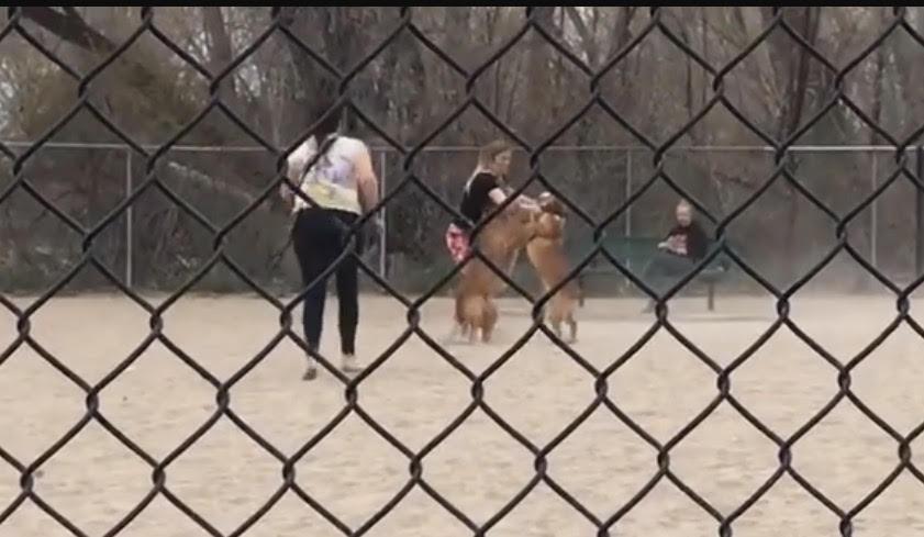 dog fights park orem utah