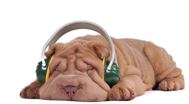 dog not listening behavior utah