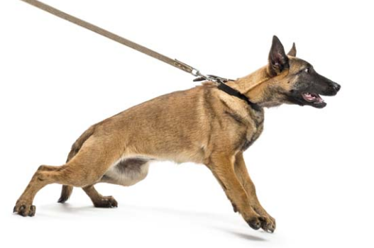 dog obedience training orem utah