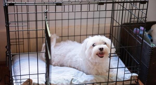 dog training obedience trainer utah county