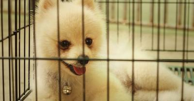 puppy training potty orem utah county