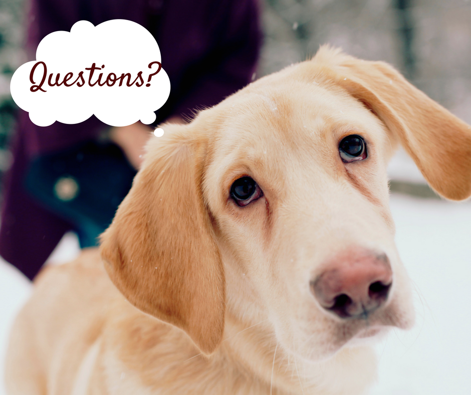 dog training utah county orem questions