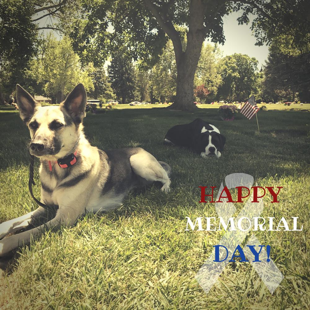 memorial day dog training utah county