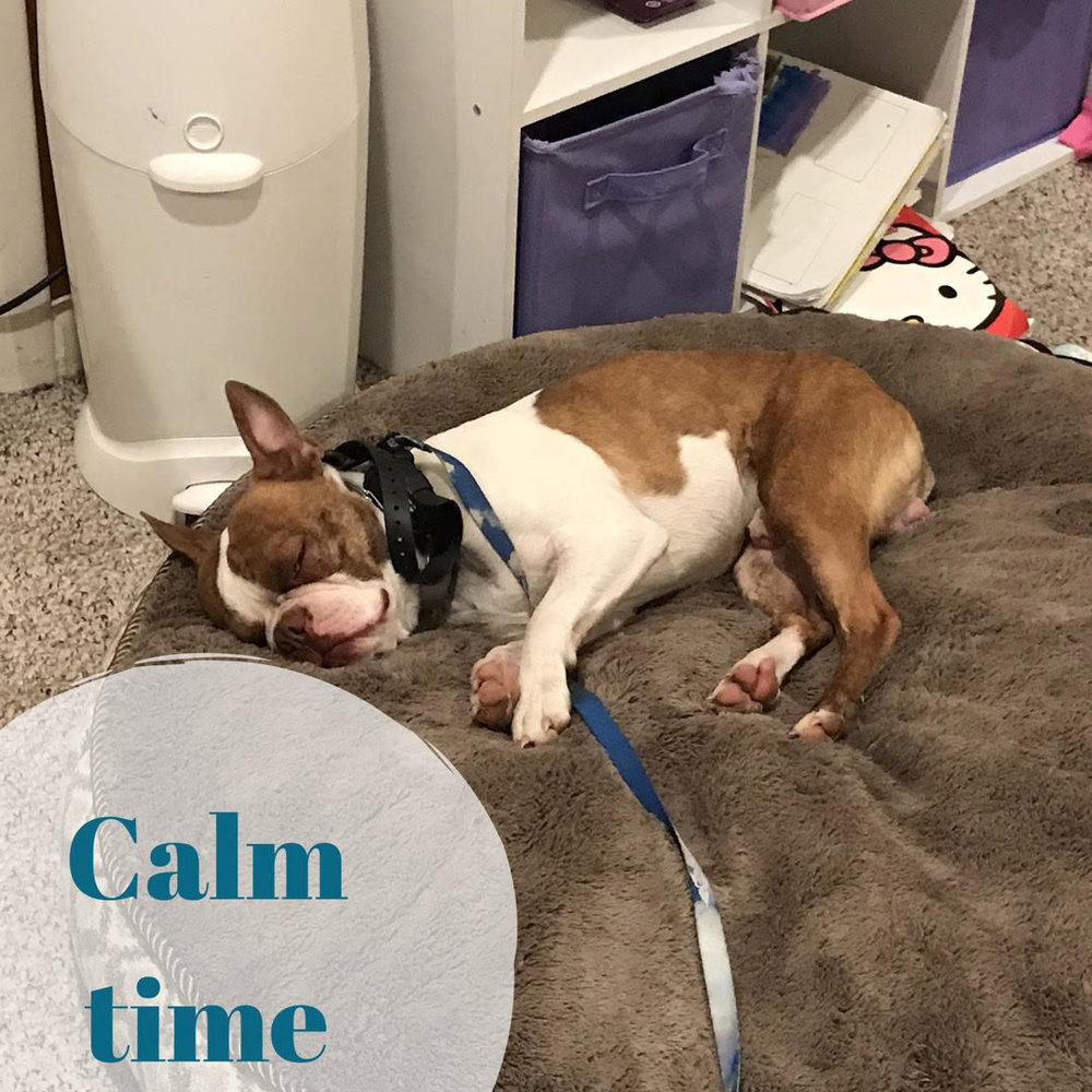 utah county dog training obedience orem