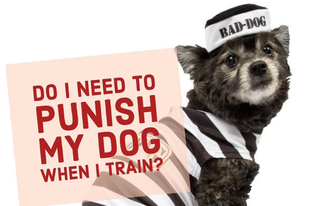 utah county orem dog training obedience behavior trainer
