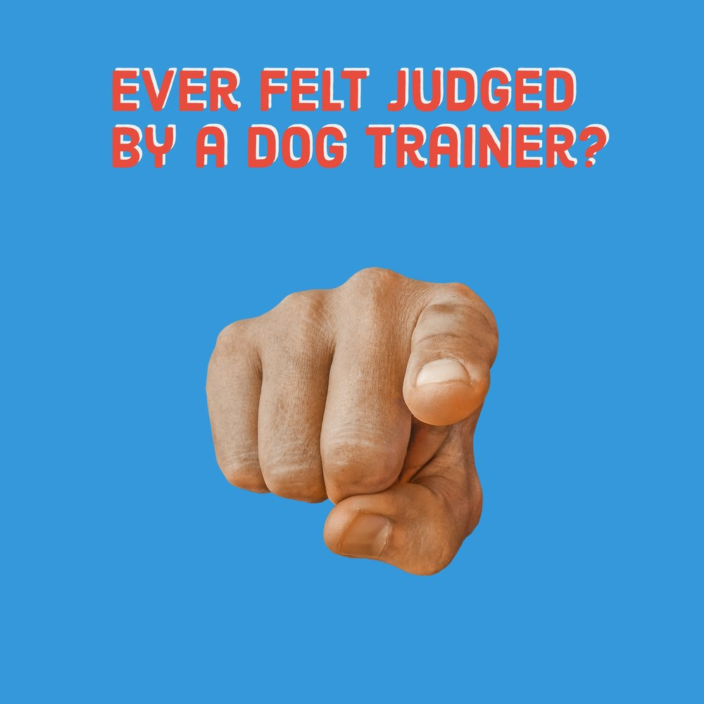 dog obedience training orem utah county trainer