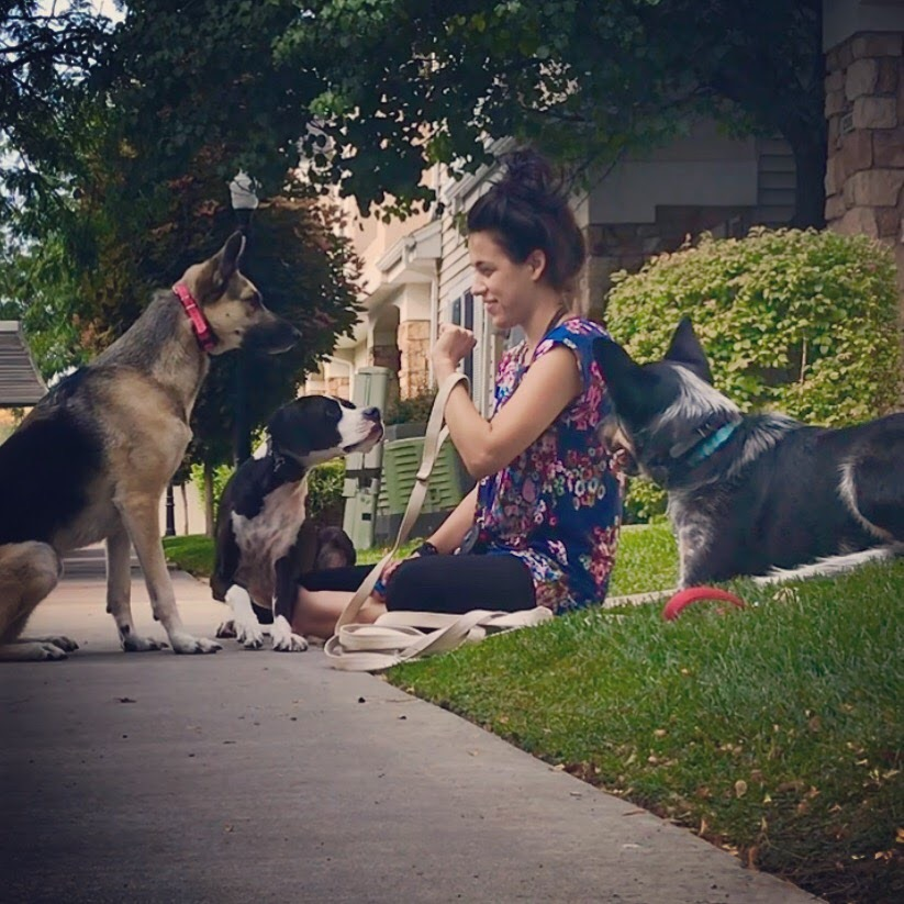 dog training obedience trainer orem utah county