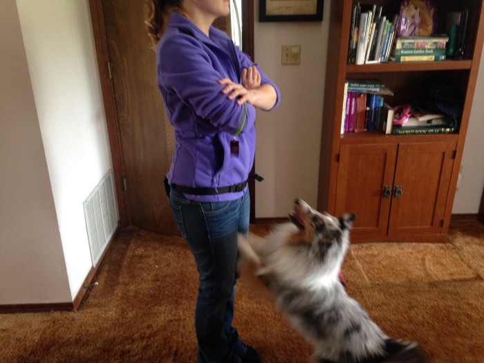 dog training obedience  orem utah county trainer