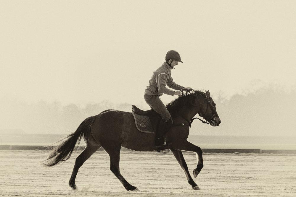 Dressage d'un cheval Henson au polo , hiver 2016. ©Evelina Jakovlevskaja